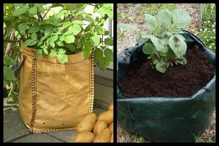 Выращивание картофеля в мешках: технология пошагово, плюсы и минусы, необходимые условия, а также сравнение с посадкой овоща в бочки и ящики русский фермер