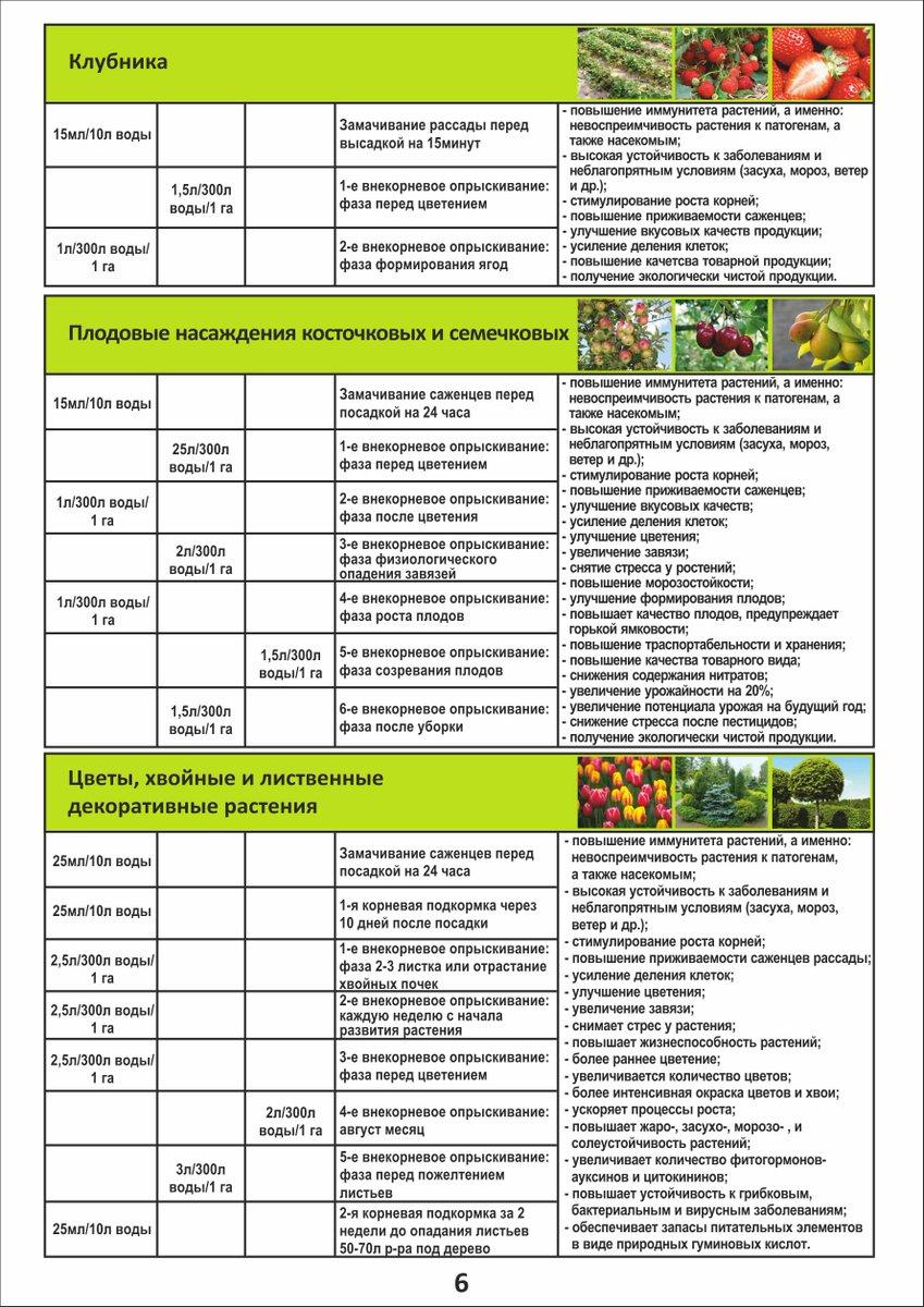 Подкормка роз: внекорневая, схемы и дозировки летом, весной, осенью, цветущих кустов