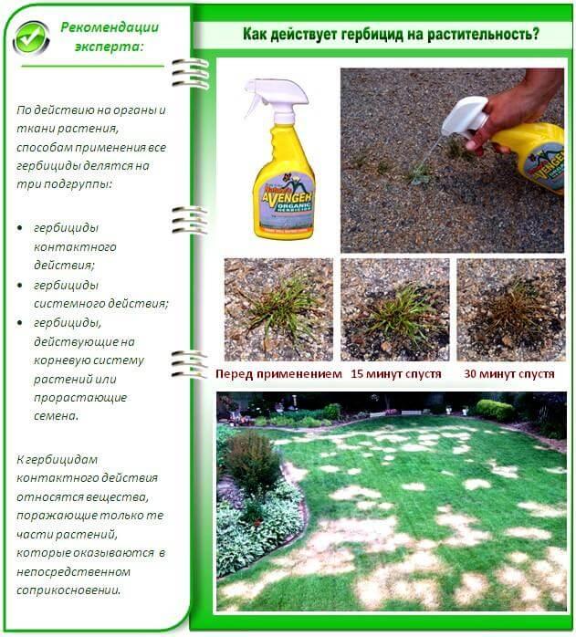 Биологическая и химические средства для защиты растений: способы применения, выбор формы и правила работы с пестицидами | cельхозпортал