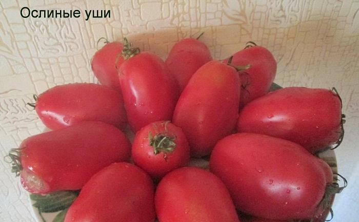 Томат ослиные уши: характеристика и описание сорта, его урожайность с фото