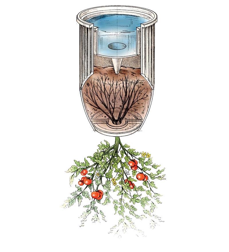 Нестандартный способ выращивания помидоров в ведрах вниз головой: пошаговая инструкция и возможные ошибки
