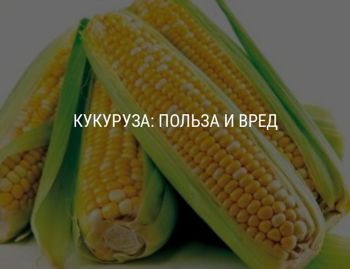 Полезные свойства кукурузы - медицинский портал eurolab