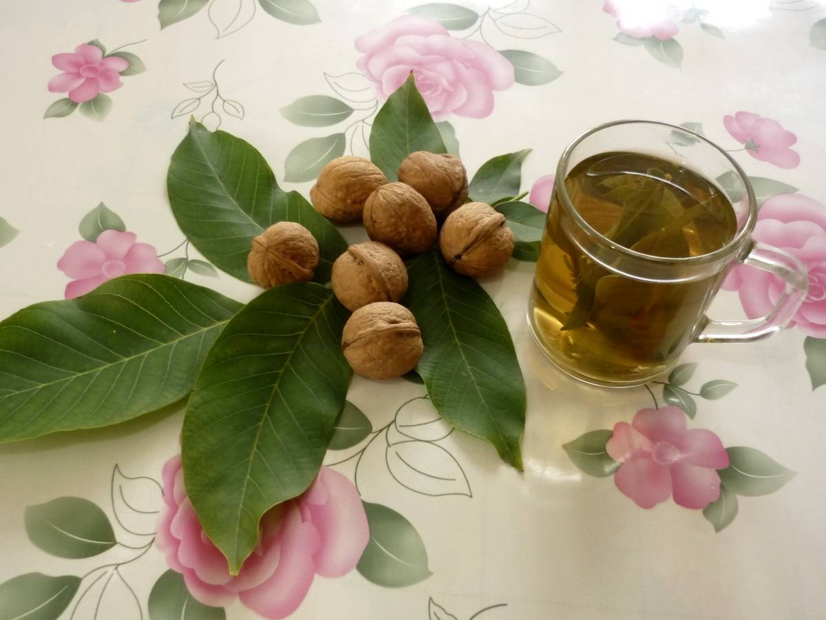 Орех и его листья природный лекарь для нашего тела | огородники