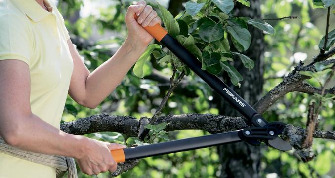Топ-12 лучших садовых ножниц для стрижки травы, кустов