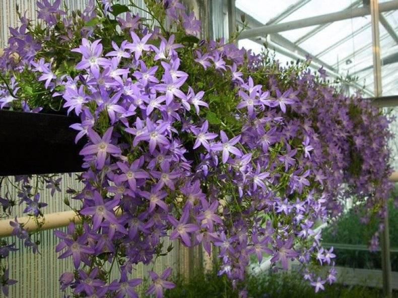 Радуга в корзине: сажаем ампельные садовые цветы
