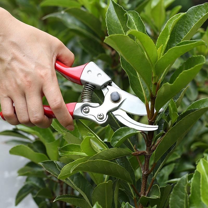 Как выбрать садовый секатор
