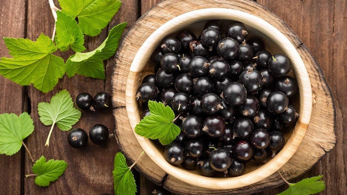 Черная смородина – суперфуд молодости. польза и вред для здоровья