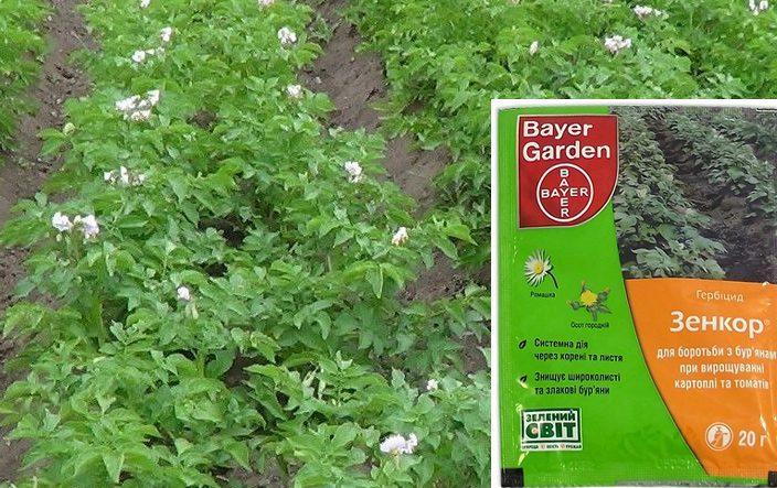 Зенкор для картофеля от сорняков: инструкция по применению, отзывы – сад и огород своими руками