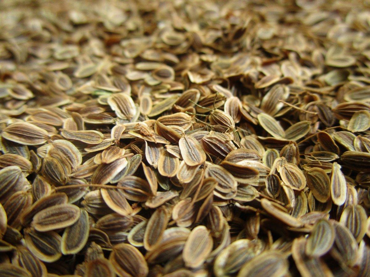Семена укропа лечат не хуже лекарств | дары природы.су