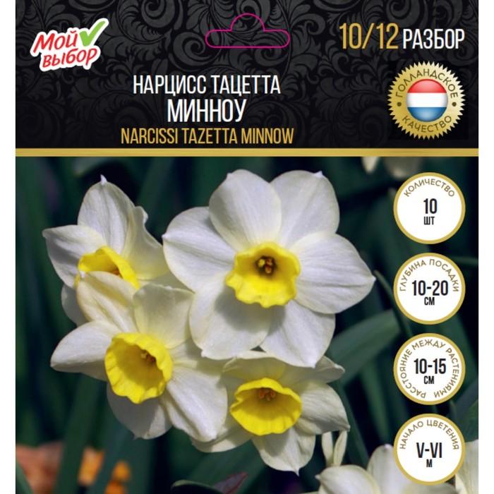 Нарцисс минноу: описание сорта и характеристики, правила посадки и ухода