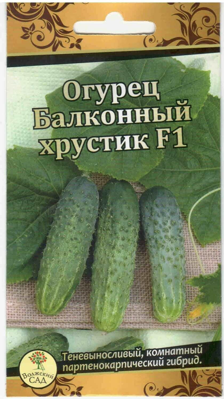Забудьте про дачу: выращиваем огурцы на балконе