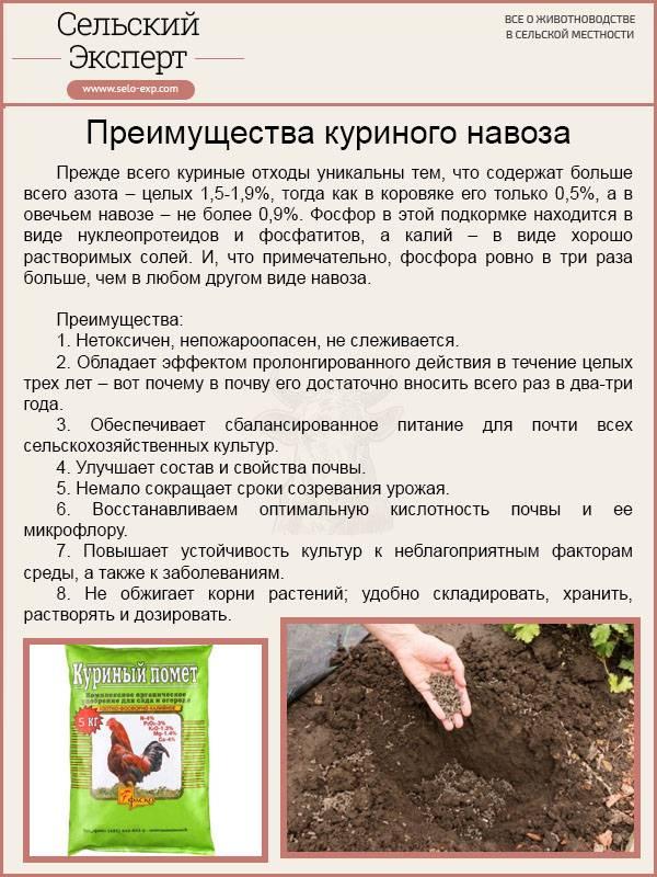 Чем и как подкормить голубику садовую весной