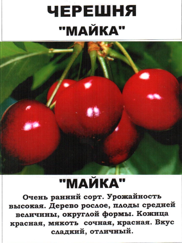 Вишня — 12 сортов для средней полосы россии, самоопыляемые, отличающиеся зимостойкостью