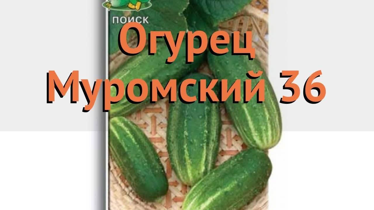 Гибрид амур f1: описание, отзывы, фото, характеристика сорта и плодов, урожайность, достоинства и недостатки