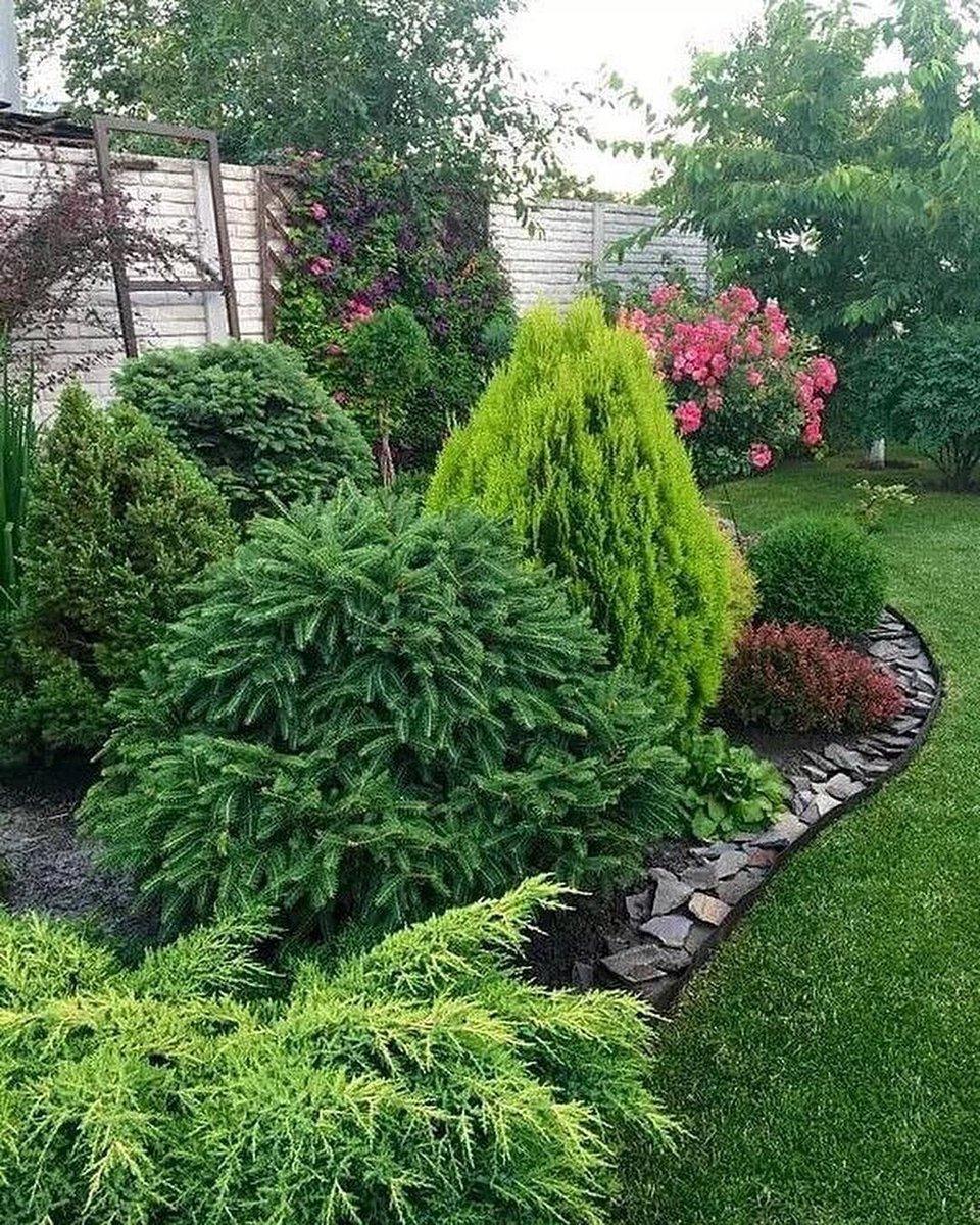 Хвойные растения для сада (120 фото) — описание особенностей использования и правила использования