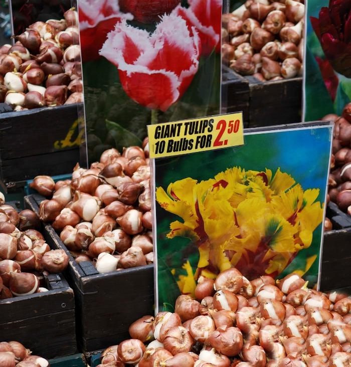 Луковицы тюльпанов: когда выкапывать и сажать