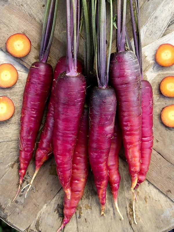 Фиолетовая морковь: фото и сорта моркови + правила выращивания