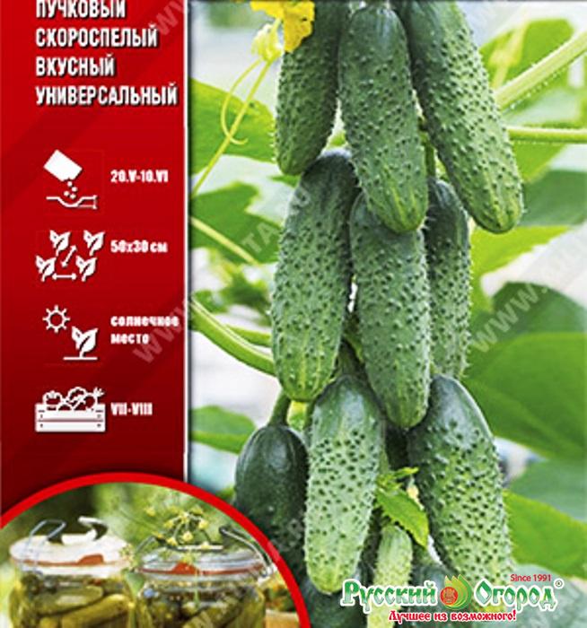 Огурец серпантин: описание сорта, посадка, отзывы, фото