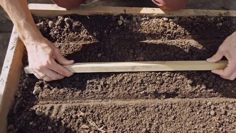 Посадка укропа в открытый грунт: сроки посева, выращивания, уход