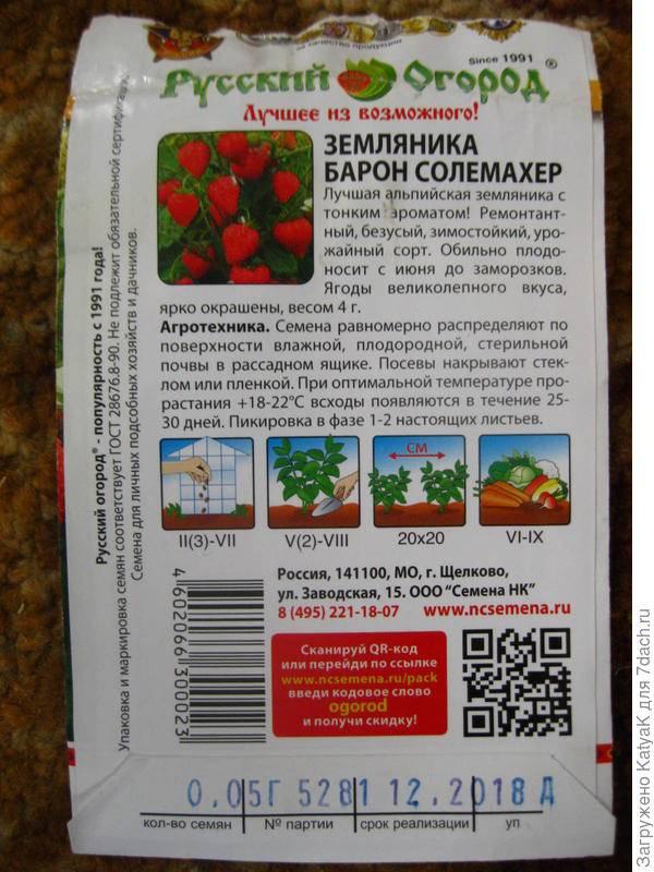 Ремонтантная земляника барон солемахер: описание сорта, характеристики, выращивание