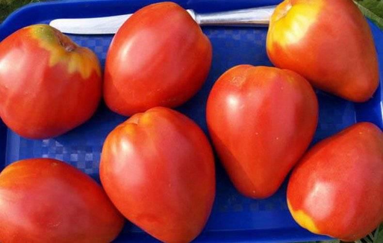 Описание сорта томата Орлиное сердце, урожайность и выращивание