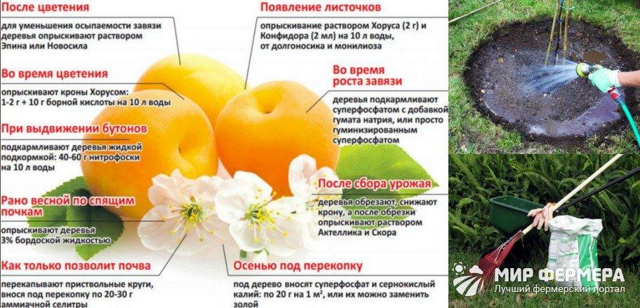 Какую подкормку лучше выбрать для абрикоса летом, как и чем удобрить