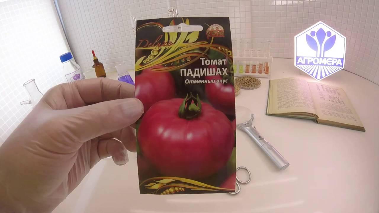 Томат шахерезада: характеристика и описание сорта помидоров, отзывы тех, кто пробовал их выращивать и фото урожая