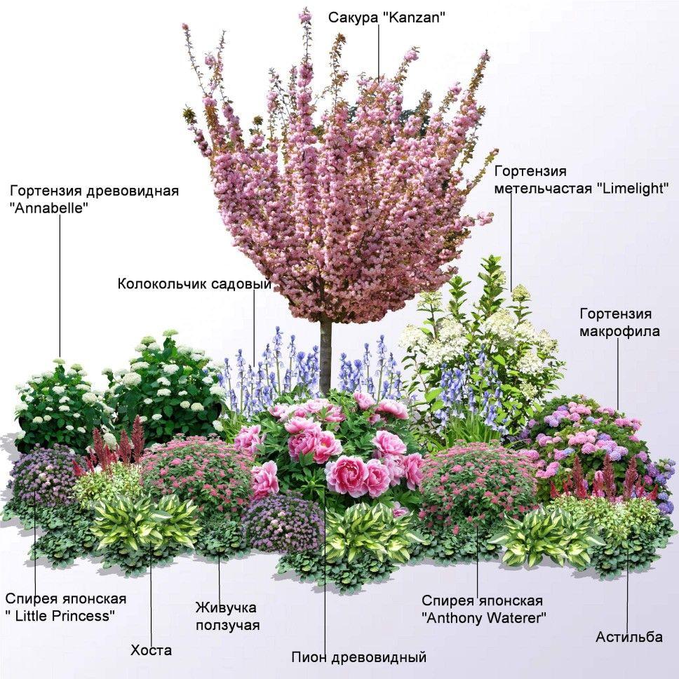 Правила сочетания цветов и растений при составлении ландшафтных композиций