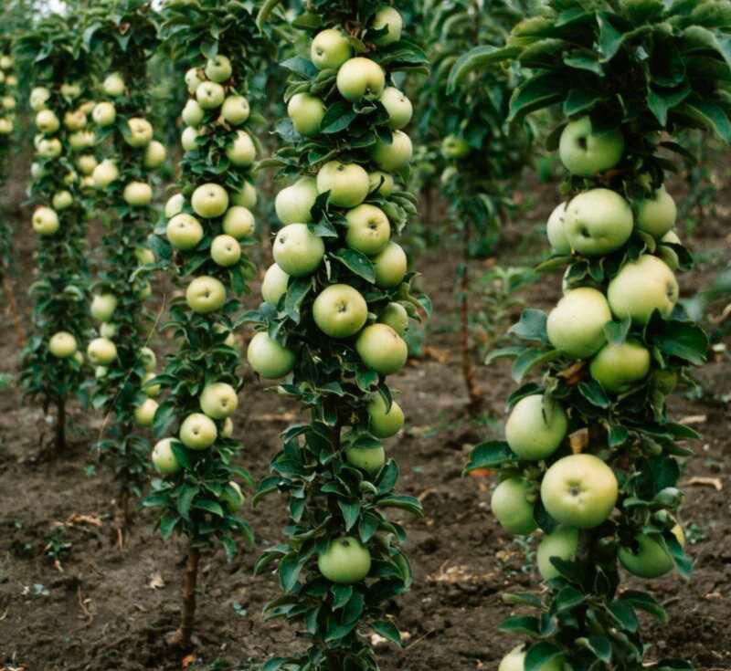 Почему яблоня не цветет, причины и лечение | tele4n.net