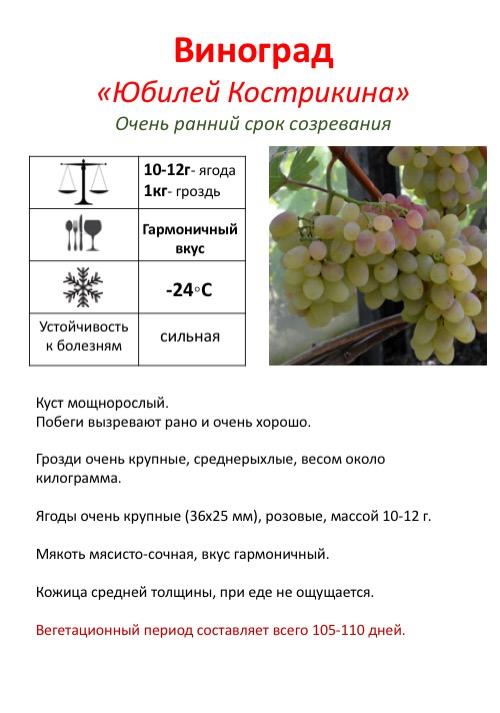 Виноград «ливия»: описание сорта, фото и отзывы
