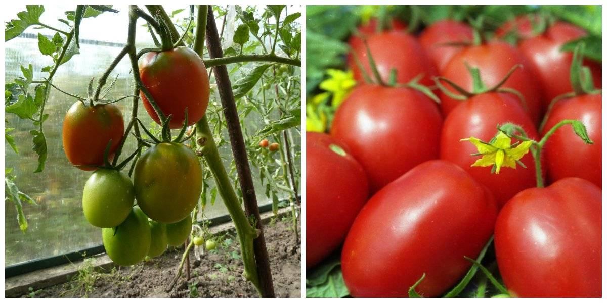 5 лучших сортов помидор для засолки