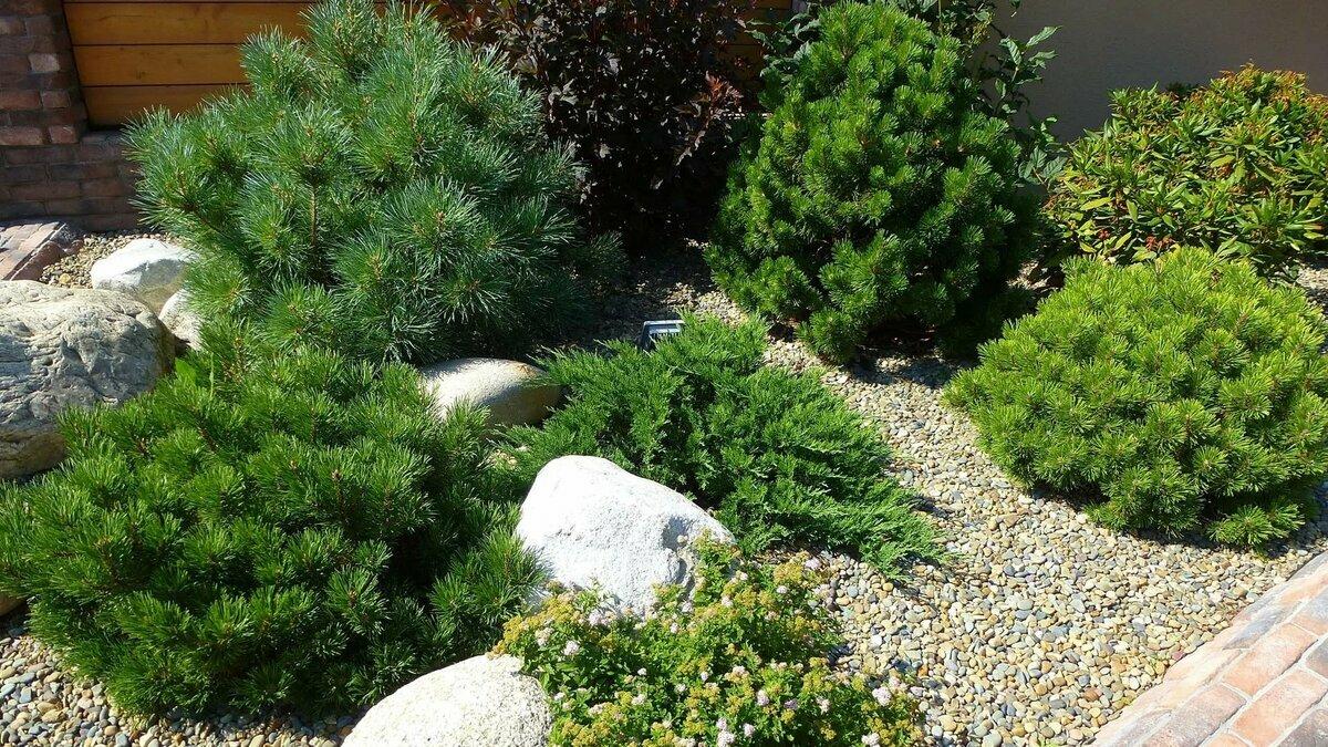 Колоновидный сад, или как на одной сотке выращивать 20 плодовых деревьев? преимущества и недостатки, уход, сорта, фото — ботаничка.ru