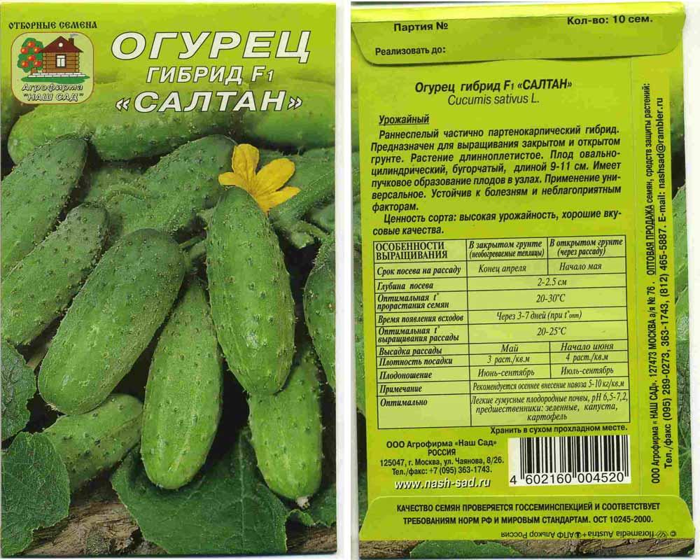 Семена огурцов голландской селекции: обзор сортов с описанием и фото