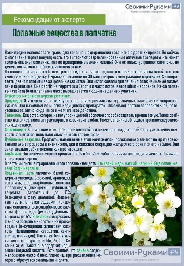 Лапчатка (66 фото): почему растение не цветет? посадка и уход в открытом грунте. описание семейства, пересадка на новое место