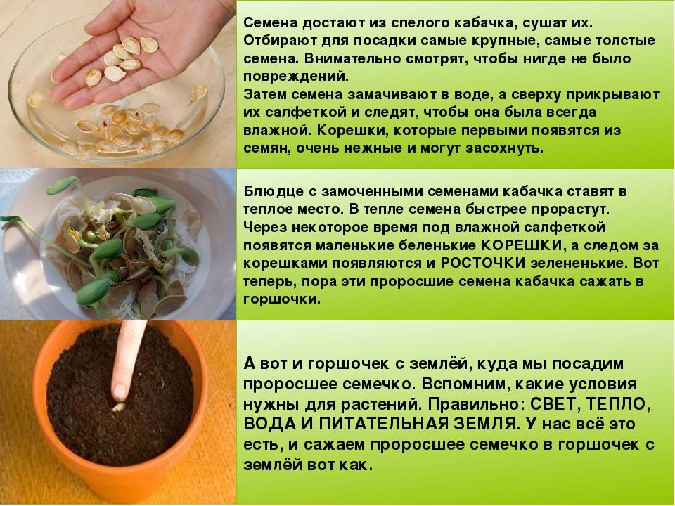Как прорастить фасоль: пошаговое руководство по проращиванию в домашних условиях