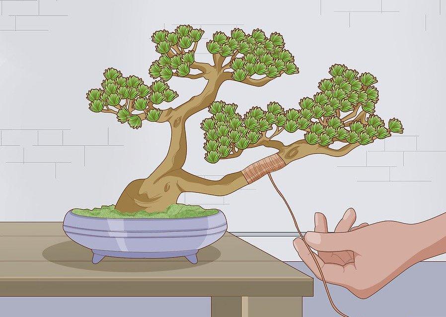 Кашпо для бонсай: особенности выбора горшка для выращивания дерева, рекомендации какой должен быть, создание плоских и объемных плошек своими руками