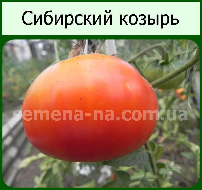 Описание и агротехника выращивания томата Сибирский козырь