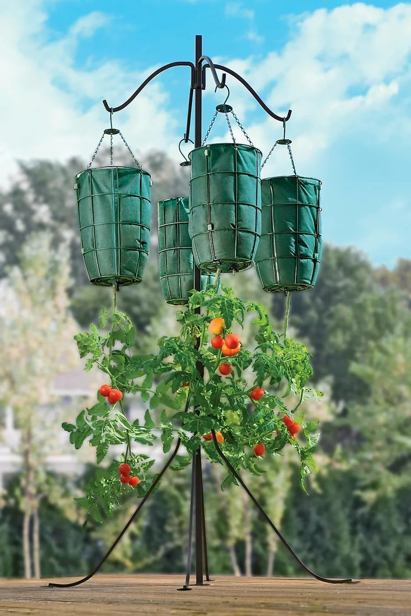 Помидоры вверх ногами – выращивание растений в перевернутом виде: зачем нужна вертикальная посадка томатов вниз головой, как правильно подготовить тару для корней? русский фермер
