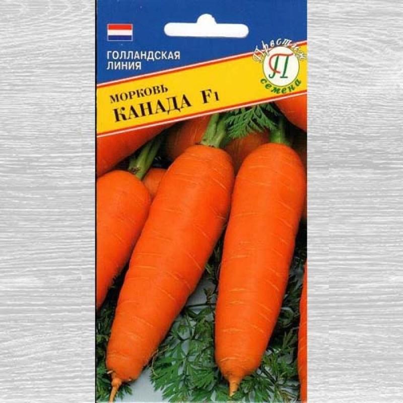 Описание сорта моркови канада f1 — как поднять урожайность