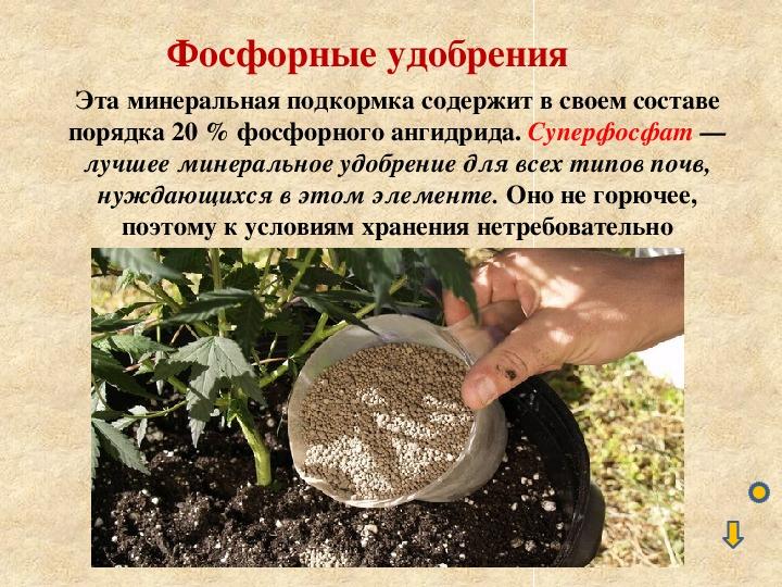 Фосфор и фосфорные удобрения. содержание и внесение в почву для растений