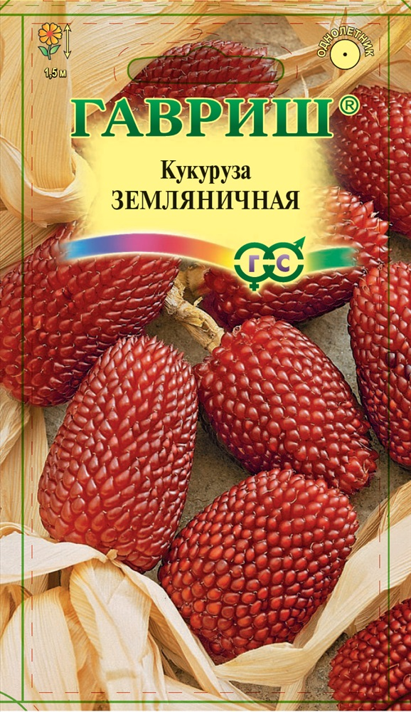 Кукуруза земляничная декоративная: как выглядит, можно ли есть, как еще используют съедобный продукт, а также выращивание из семян, посадка в открытый грунт и уход