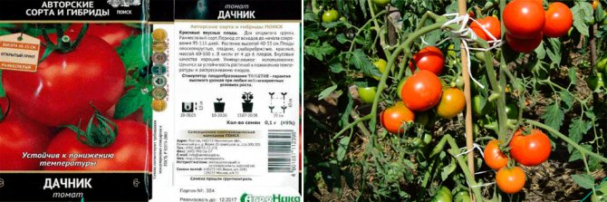 Штамбовые сорта помидоров