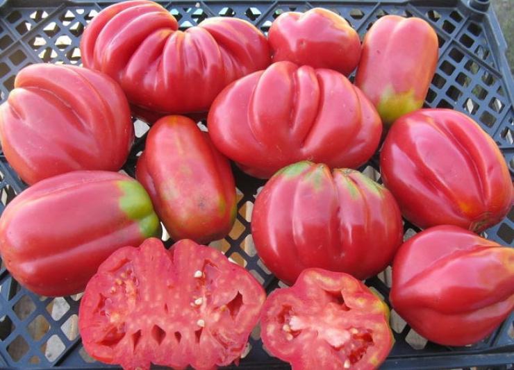 Томат инжир розовый: характеристика и описание сорта, урожайность с фото
