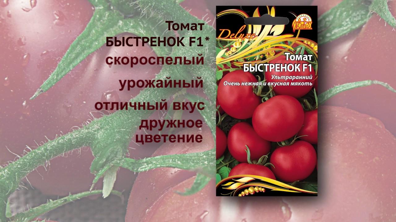 Томат «быстренок f1» радует ранним созреванием плодов