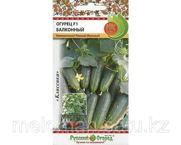 Выращивание огурцов на балконе: сорта, выбор грунта, пошагово для начинающих