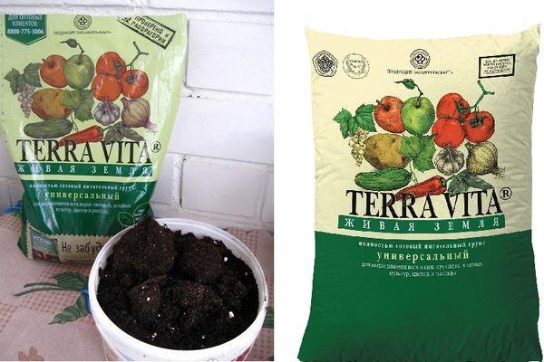 Выращивание рассады томатов по методу терехиных - самоцветик - медиаплатформа миртесен