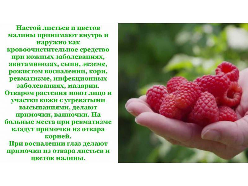 Полезные свойства и технология выращивания желтой малины