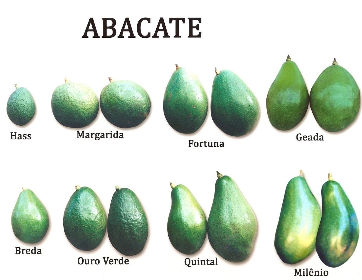 Разнообразие сортов авокадо
