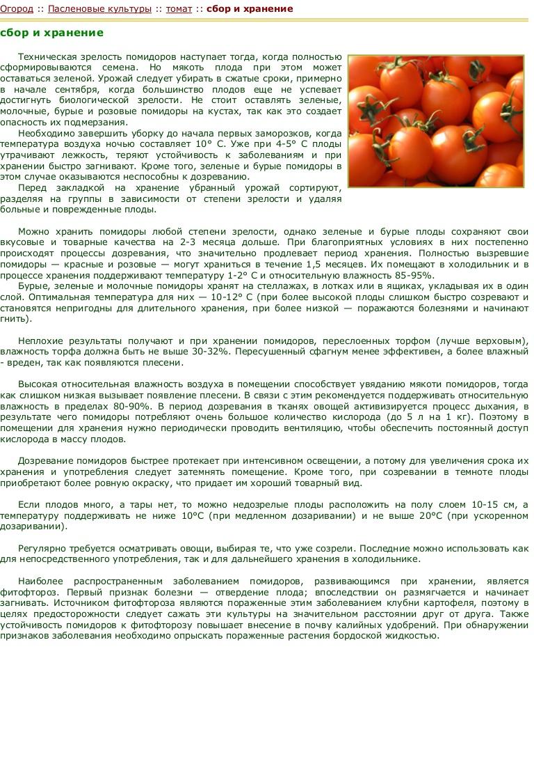 Через сколько дней помидоры соленые можно есть. pravilnohranuedy.ru