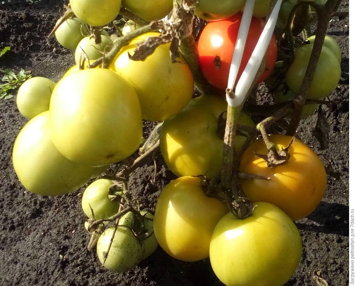 Томат большая мамочка: характеристика и описание сорта, урожайность с фото